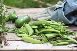 Agriculture bio. En recherche de propriété avec habitation