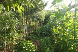 Ferme agroécologique (production maraîchère et fruitière)